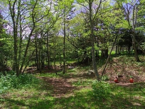 新緑の森.jpg