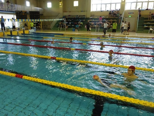 市民水泳 背泳ぎ.jpg